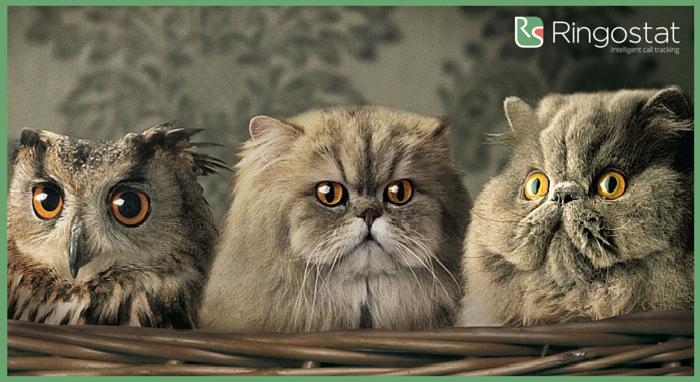 Коты (1)